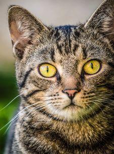 Free Cat Stock Photography - 36123812