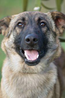 Free Smiling Dog Stock Photography - 36124402
