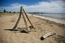 Free Drift Wood On The Beach. Royalty Free Stock Photography - 36127837