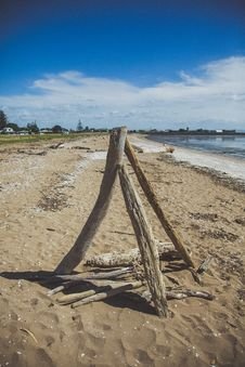 Free Drift Wood On The Beach. Stock Photos - 36127843