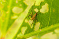 Free Spider On Leaf Royalty Free Stock Image - 36136606