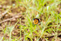 Free Butterfly On A Flower. Royalty Free Stock Images - 36136839