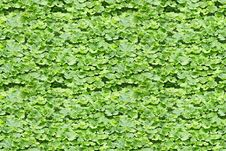Seamless Background From Burdock Leaves Stock Image