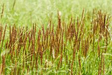 Free Field Of Grass Stock Image - 36136621