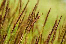 Free Field Of Grass Royalty Free Stock Image - 36136656