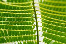 Free Green Leaves Stock Photo - 36136680