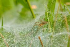 Spider On Net Stock Photography