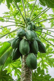 Free Papaya Royalty Free Stock Images - 36138629