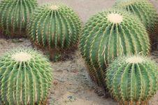 Free Cactus Royalty Free Stock Image - 36138676