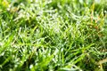 Free Fresh Spring Green Grass Stock Image - 36150601
