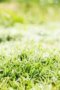 Free Fresh Spring Green Grass Stock Photo - 36150610