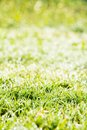 Free Fresh Spring Green Grass Stock Images - 36150614