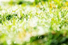 Free Fresh Spring Green Grass Royalty Free Stock Photos - 36150588