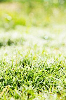 Free Fresh Spring Green Grass Stock Photo - 36150610