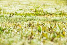 Free Resh Spring Green Grass Stock Image - 36150621