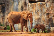 Mother Elephant With Baby Elephant
