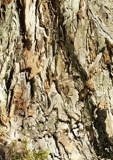 Free Hawthorn Trunk. Stock Photography - 36156072