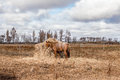 Free Horse Eating Hay Stock Photo - 36161470