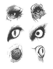 Free Set Of Vector Animal Eyes. Hand Drawn. Eps8 Stock Images - 36161864