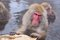 Free Snow Monkey Park Stock Images - 36162944