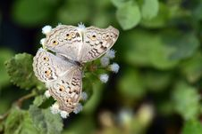 Free Butterfly Stock Image - 36172011