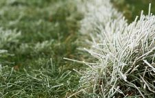 Free Green Grass And Freezing Fog Stock Photo - 36177000