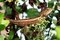 Free Chameleon Stock Photography - 36172042