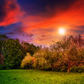 Free Forest Glade In  Shade Of The Trees At Sunset Royalty Free Stock Image - 36181116