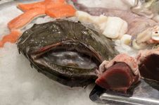 Free Fresh Monkfish Stock Photography - 36184802