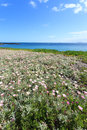 Free Deep Blue Sea And Beautiful Flowers On The Coastline Stock Images - 36190584