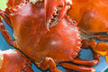 Free Seafood &x28;crab&x29; Stock Images - 36191334