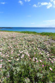 Free Deep Blue Sea And Beautiful Flowers On The Coastline Stock Images - 36190584
