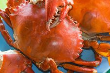 Seafood &x28;crab&x29; Stock Images