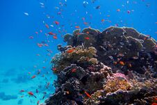 Free Colorful Coral And Many Fish Stock Image - 36192921