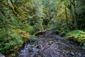 Free Forest Stream Stock Photo - 3626020