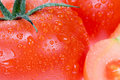 Free Fresh Tomato Stock Photos - 3626903