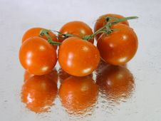 Free Vine Tomatoes In A Wet Surface Stock Image - 3621211