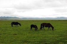 Free The Horse Family Royalty Free Stock Photo - 3622235