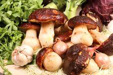 Free Mushroom – Cep Royalty Free Stock Images - 3622559