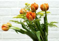 Free Orange Tulips Royalty Free Stock Photo - 3624405
