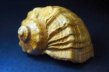 Free Sea Shell Stock Photo - 3624410