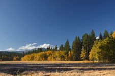 Free Aspen Grove And Meadow Royalty Free Stock Photo - 3625305