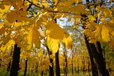 Free Autumn Stock Photography - 3625602