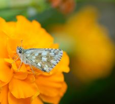 Free Butterfly Stock Photography - 3625652