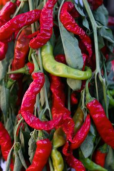 Free Colorful Peppers On Display Royalty Free Stock Photo - 3625925