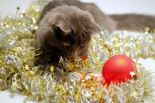 Free Christmas Cat Royalty Free Stock Photo - 3626455