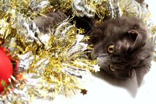 Free Christmas Cat Royalty Free Stock Images - 3626469