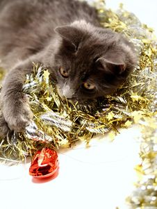 Free Christmas Cat Royalty Free Stock Images - 3626479