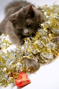 Free Christmas Cat Royalty Free Stock Photography - 3626487