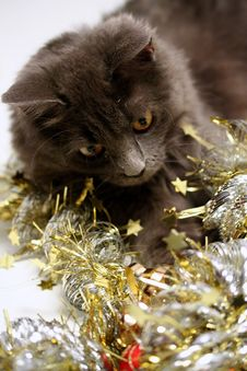 Free Christmas Cat Royalty Free Stock Photo - 3626525